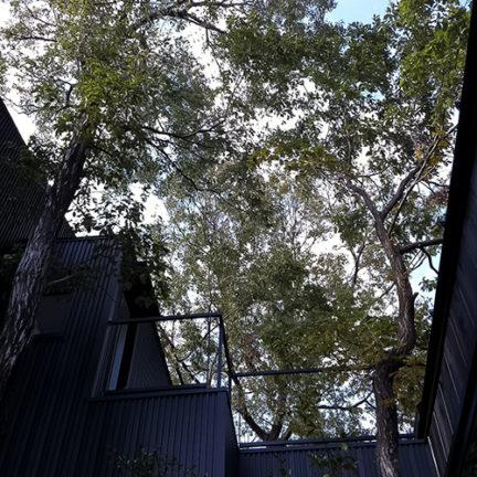 元から敷地内にあったコナラの木を5本残した