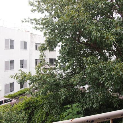 103_南側に大きな木が